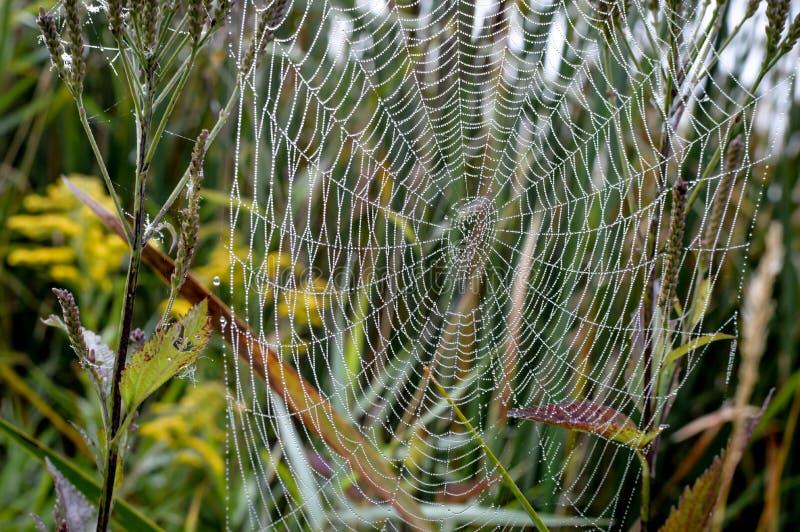 Web de araña con descensos de rocío de la mañana foto de archivo libre de regalías