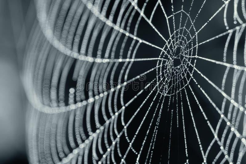 Web de araña con gotas de rocío fotografía de archivo