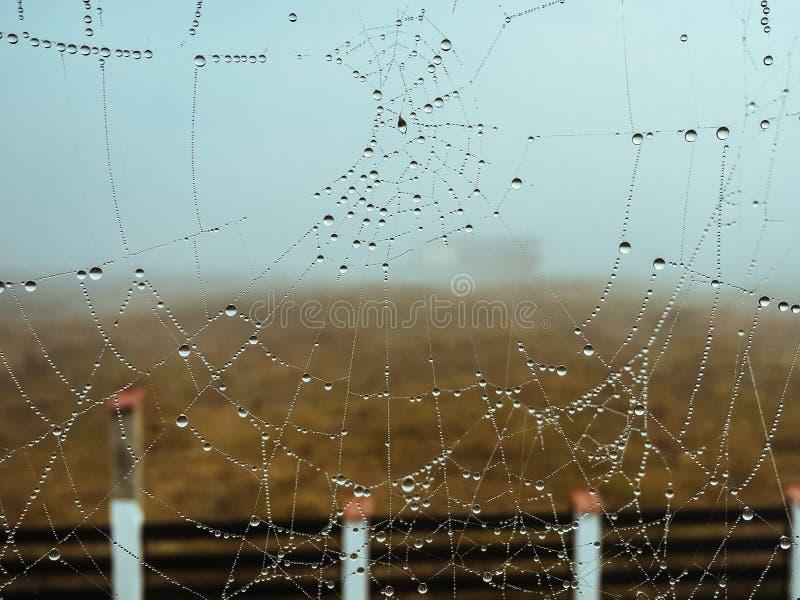 Web de araña con gotas de lluvia fotografía de archivo
