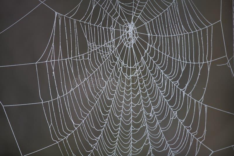Web de araña con helada foto de archivo libre de regalías