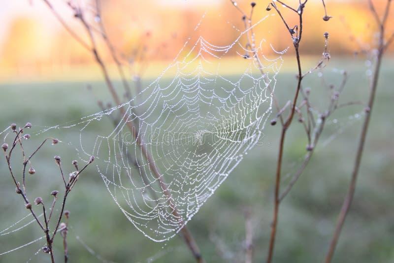 Web de araña con rocío de la mañana imagen de archivo libre de regalías