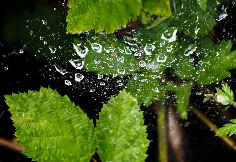 Web de ara?a en descensos del agua despu?s de la lluvia fotos de archivo