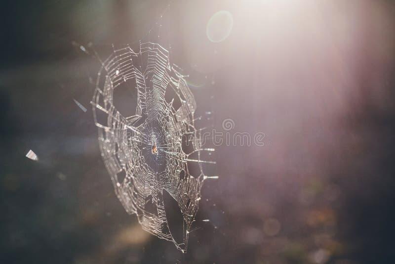 Web de araña en el bosque fotos de archivo libres de regalías
