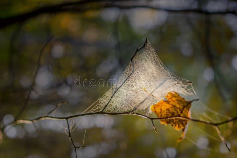 Web de araña en el bosque de la mañana imagen de archivo