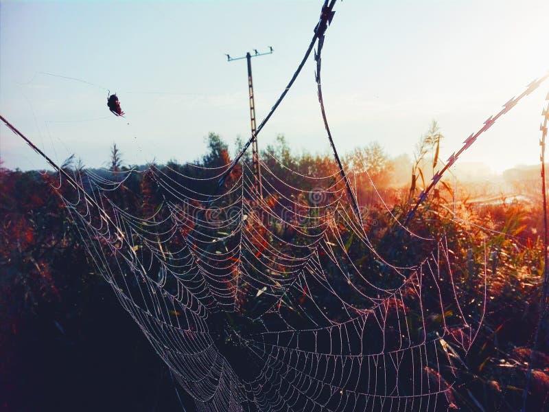 Web de araña en la frontera húngara imágenes de archivo libres de regalías