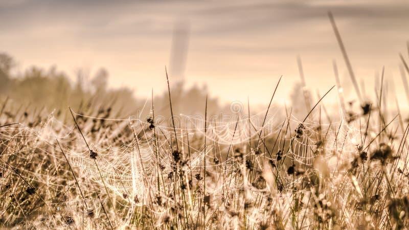 Web de araña en la hierba en un prado imagenes de archivo