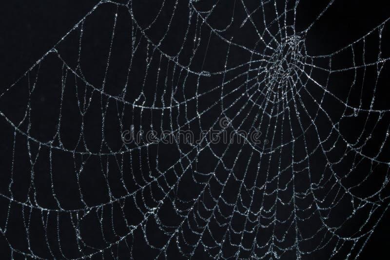 Web de araña en negro foto de archivo libre de regalías