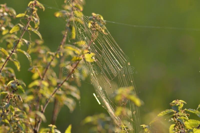Web de araña en una rama fotos de archivo