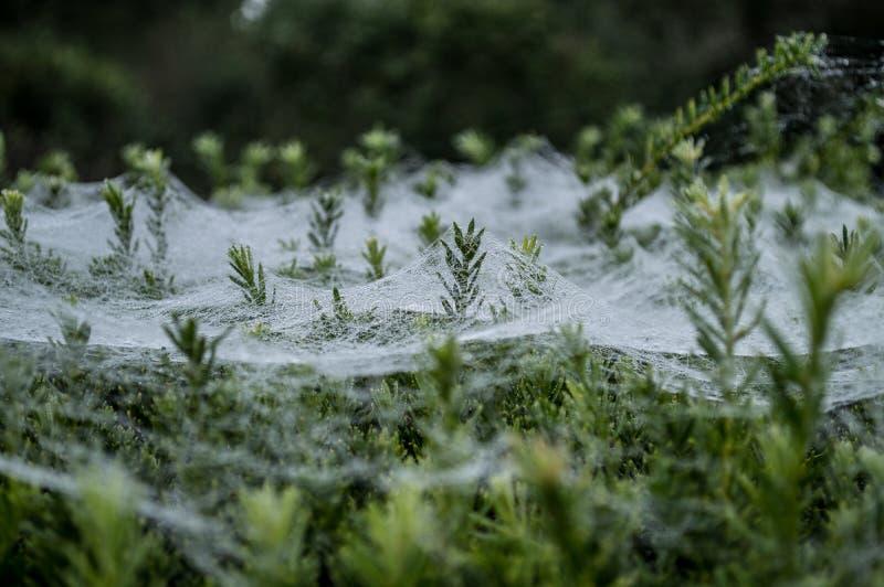 Web de araña escarchado fotografía de archivo