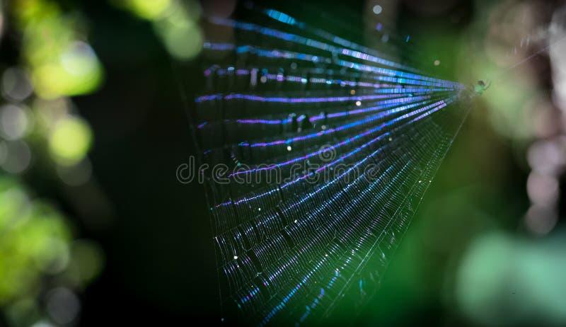 Web de araña iridiscente en Costa Rica imagen de archivo