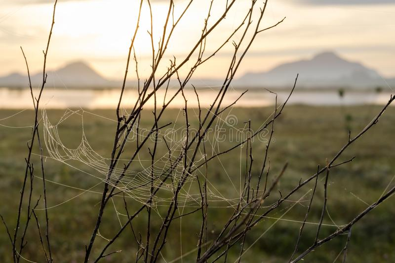 Web de araña o telaraña con descensos del agua después de la lluvia en fondo de la montaña fotografía de archivo libre de regalías