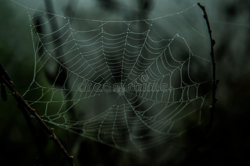 Web de araña oscura foto de archivo libre de regalías