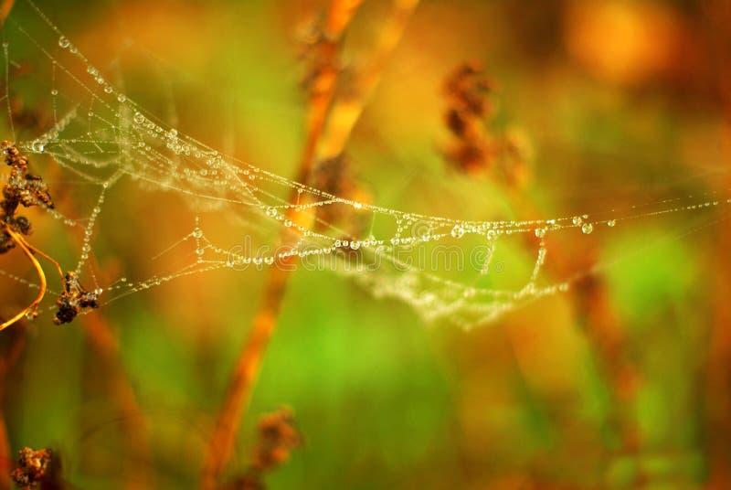 Web de araña y gotas de rocío fotos de archivo libres de regalías