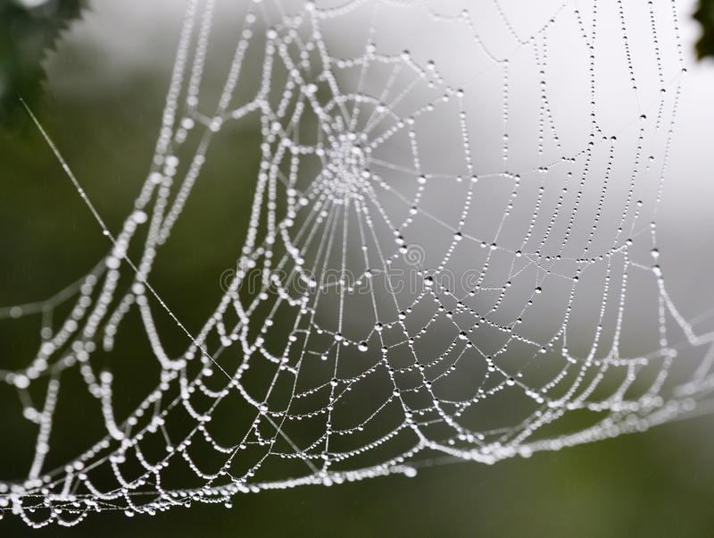 Web de arañas imágenes de archivo libres de regalías