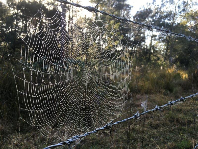 Web de arañas en el alambre de púas con rocío de la mañana imagen de archivo libre de regalías
