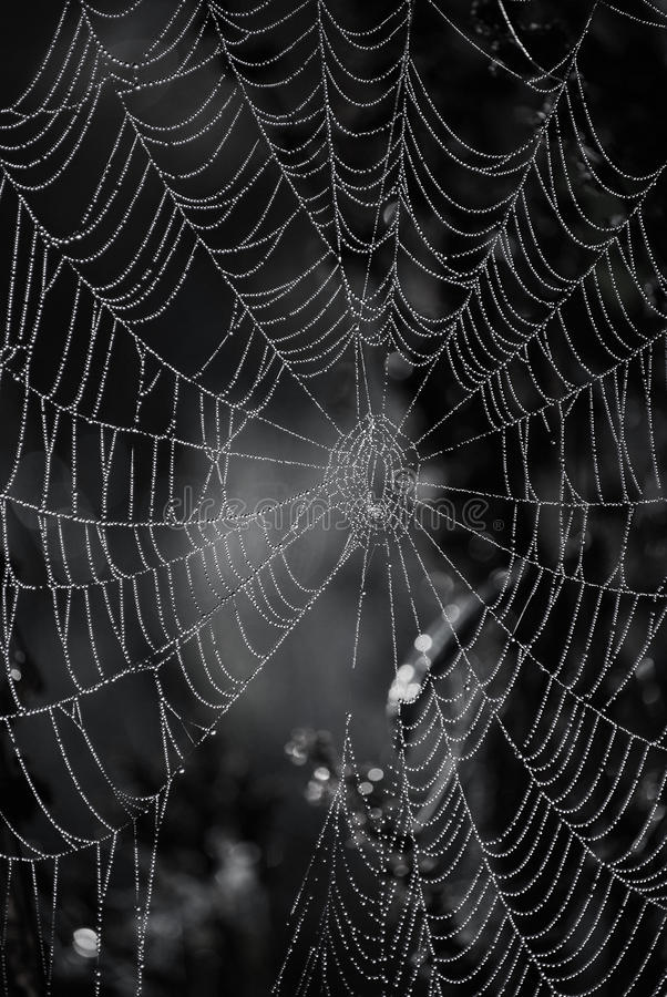 Web de aranha foto de stock royalty free