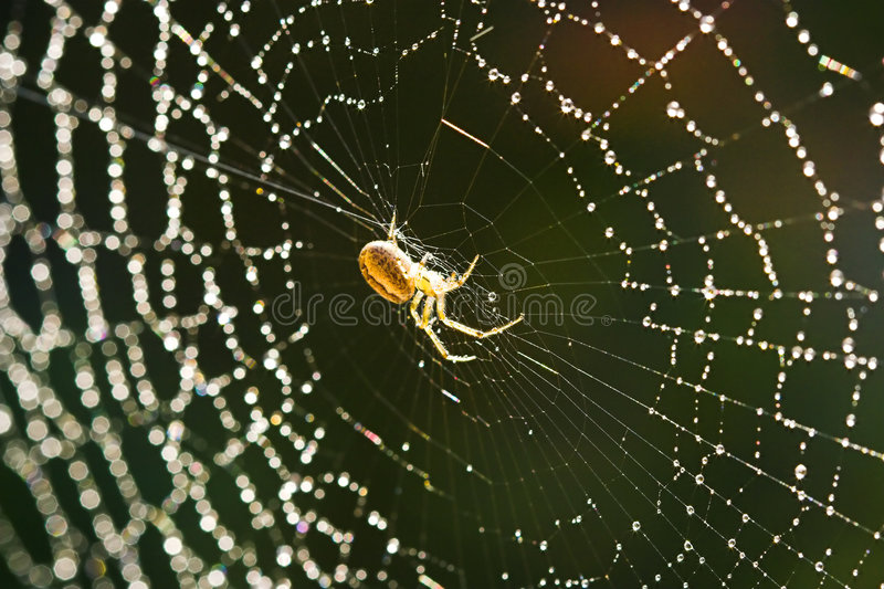 Web de aranha fotos de stock