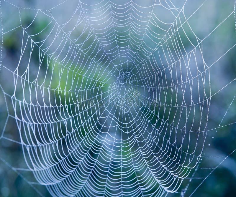 Web de aranha imagens de stock royalty free
