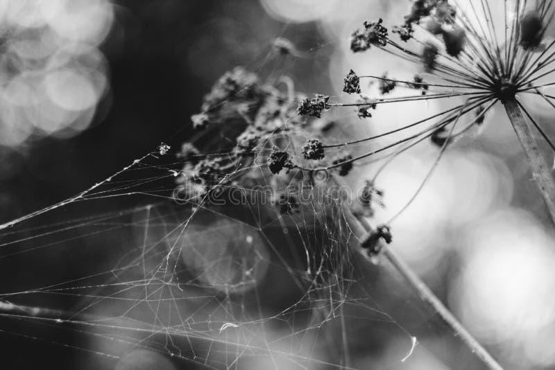 Web de aranha bonitas em flores foto de stock