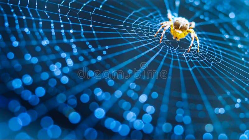 Web de aranha com gotas da água imagem de stock