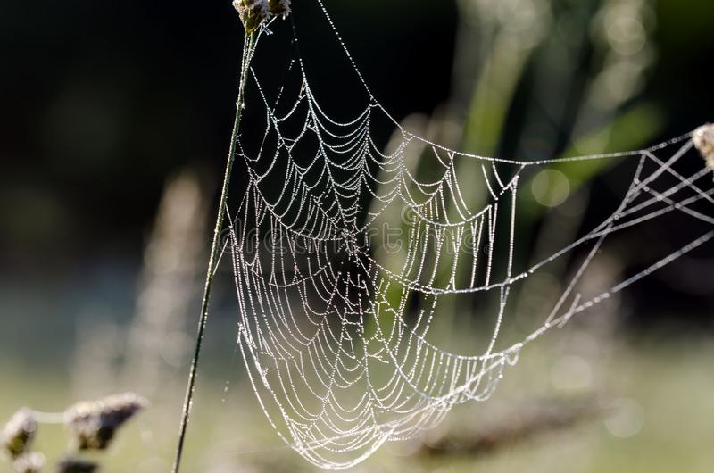 Web de aranha com gotas da água da pérola foto de stock royalty free