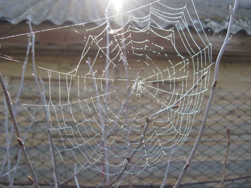 Download A Web De Aranha Com Orvalho Foto de Stock - Imagem de aranha, grade: 29847076