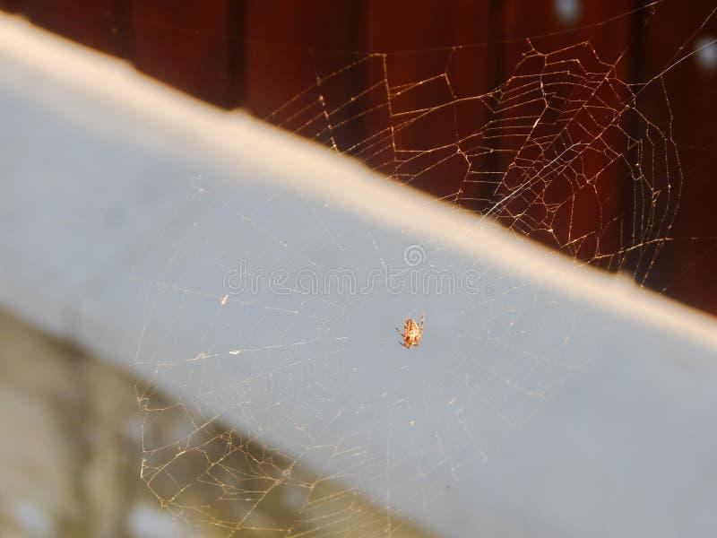 Web de aranha com aranha pequena imagem de stock