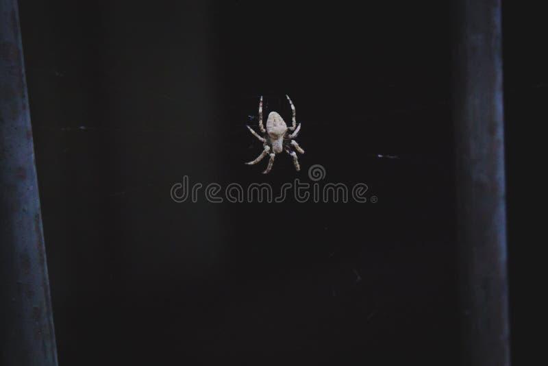 Web de aranha com uma aranha branca fotografia de stock