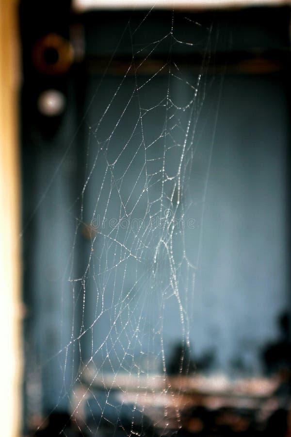 Web de aranha com uma porta azul no fundo fotografia de stock royalty free