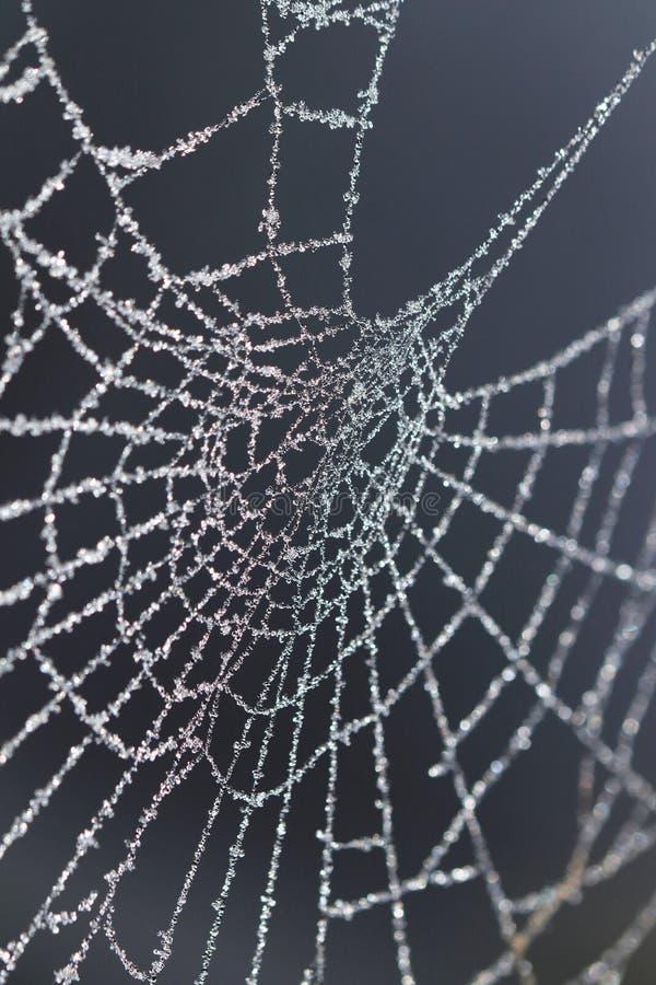 Web de aranha congelada coberta com os cristais de gelo pequenos fotos de stock royalty free