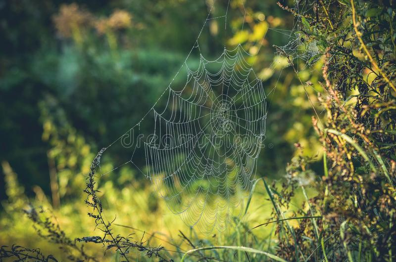 Web de aranha da manhã imagens de stock royalty free