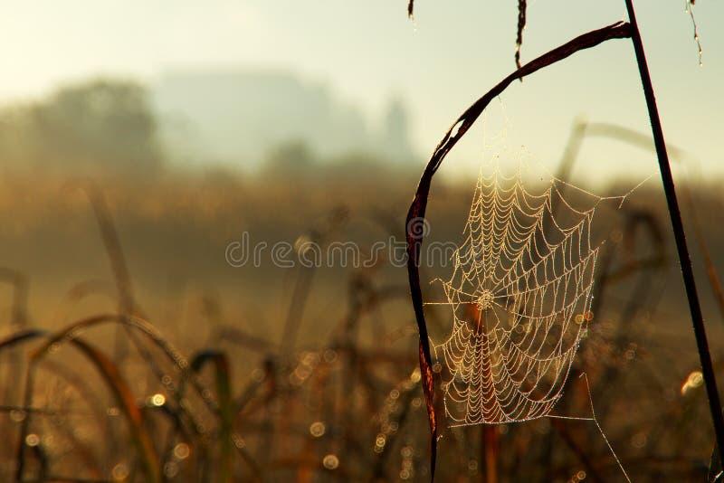Web de aranha em Autumn Morning fotografia de stock royalty free