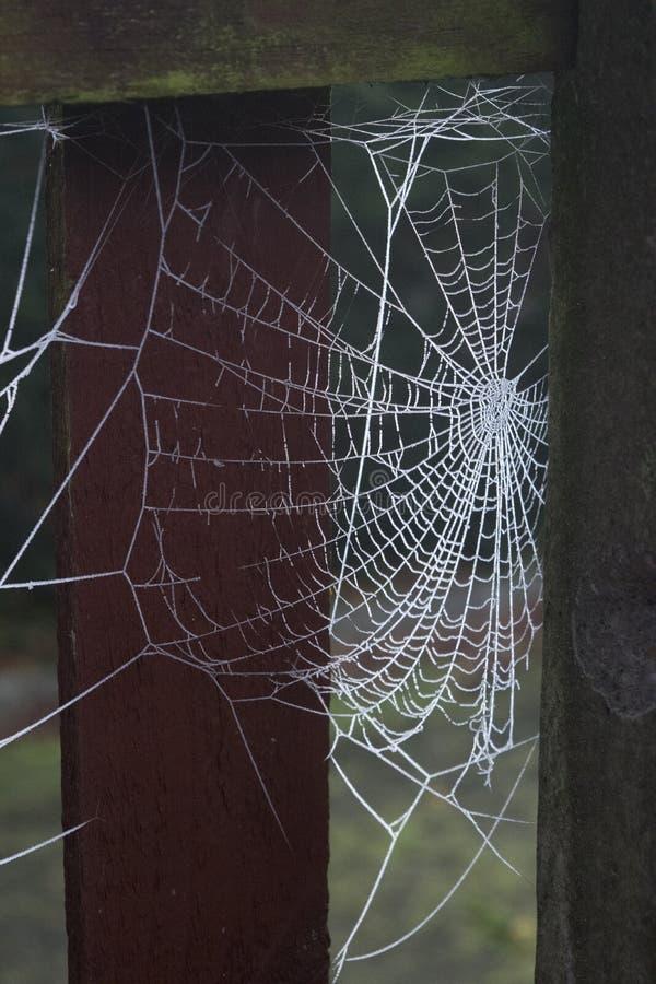 Web de aranha gelado fotografia de stock