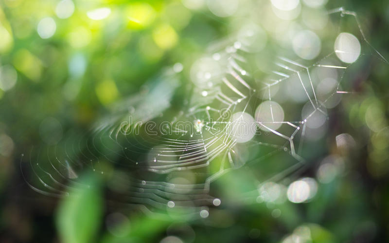 Web de aranha macia do foco com fundo borrado foto de stock