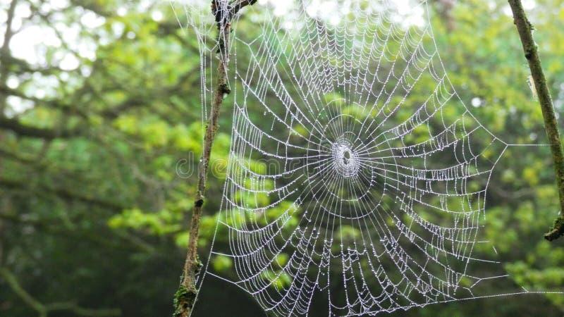 Web de aranha na floresta imagem de stock