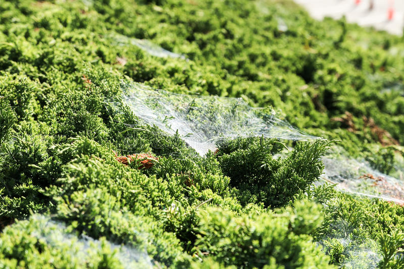 Web de aranha na grama verde fotos de stock