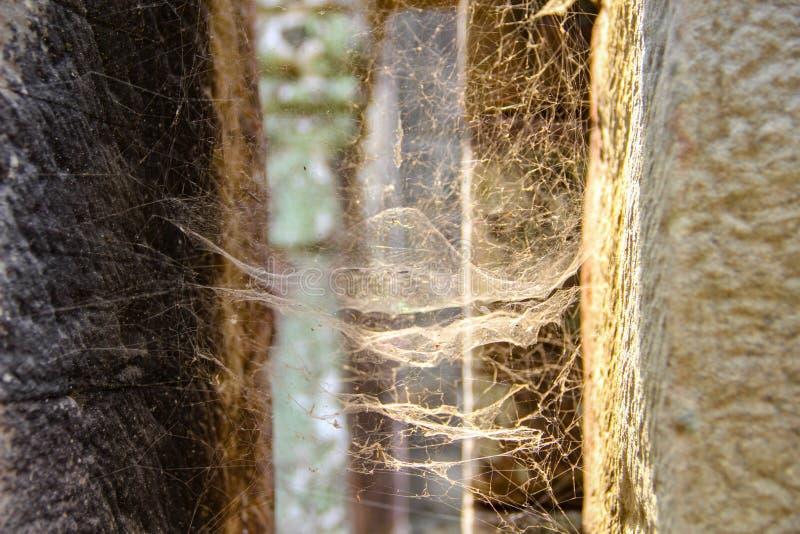 Web de aranha na reflexão do por do sol imagem de stock royalty free