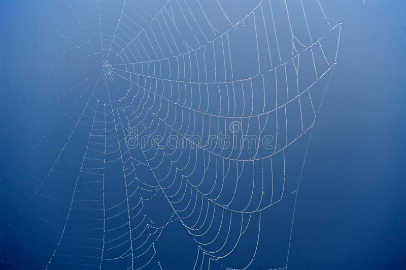 Web de aranha no fundo azul. foto de stock