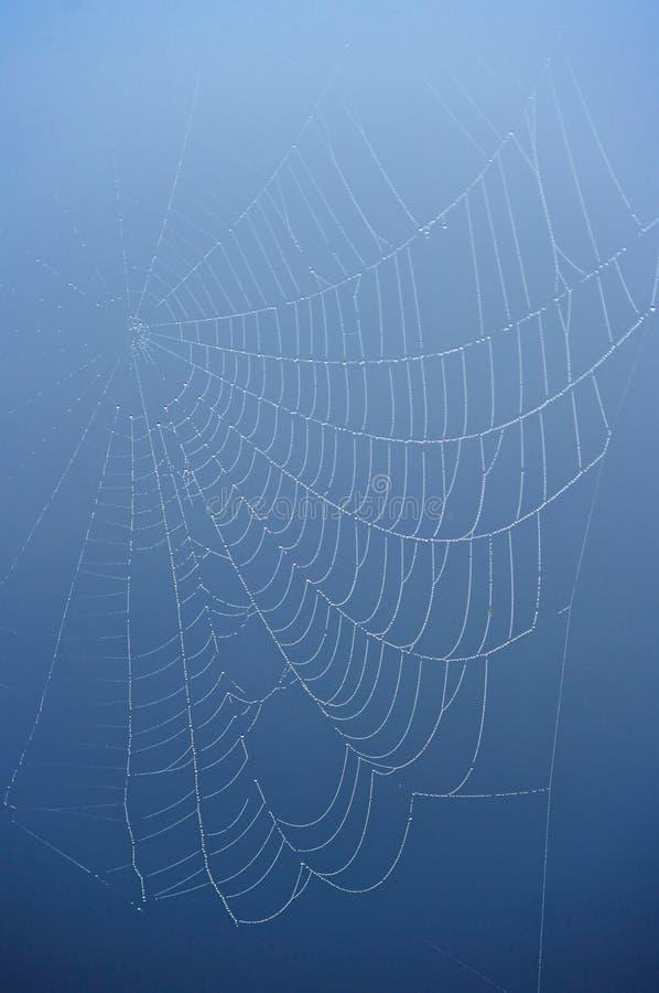 Web de aranha no fundo azul. imagem de stock