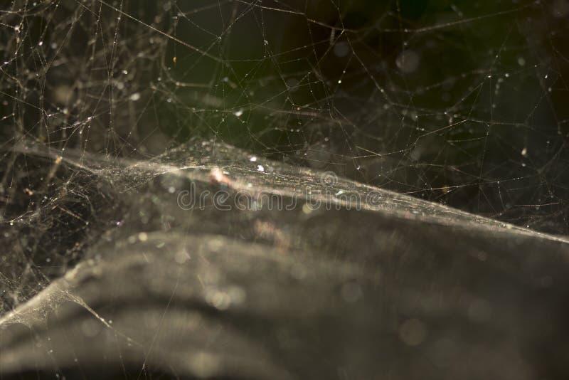Web de aranha no jardim Close-up Tom morno Nascer do sol brilhante Backg foto de stock