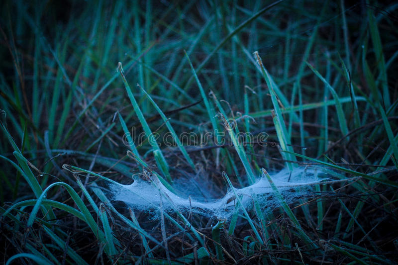Web de aranha no orvalho fotografia de stock