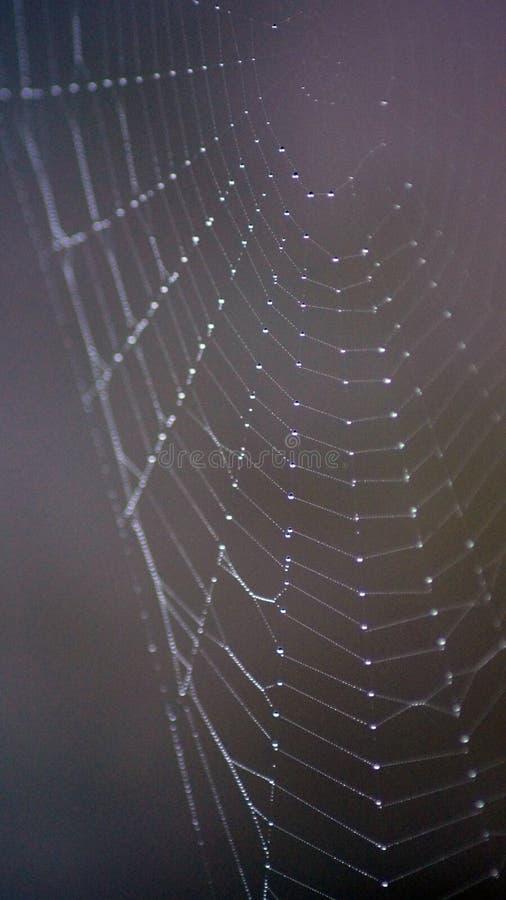 Web de aranha - a perfeição da natureza fotos de stock