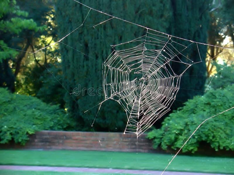 Web De Aranha Sem A Aranha Fotos de Stock Royalty Free