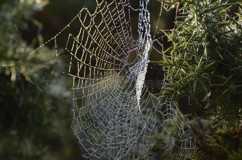 Web de aranhas imagem de stock royalty free