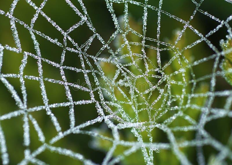 Web de aranhas geado fotografia de stock