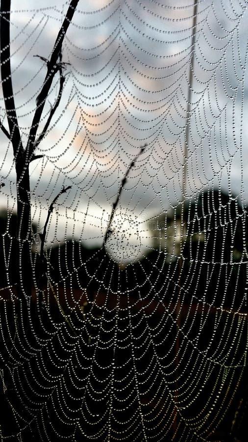 'Web de la armonía' foto de archivo