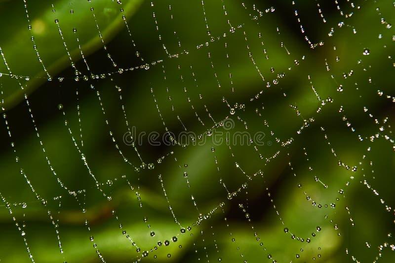 Web del ragno con rugiada fotografia stock libera da diritti