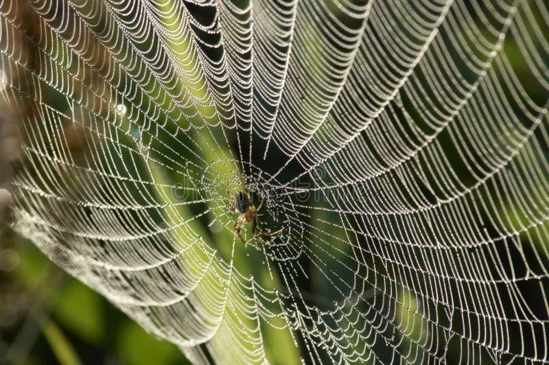 Web della goccia di rugiada fotografia stock