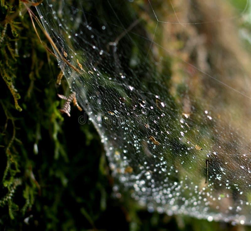 Web der Spinne stockbild