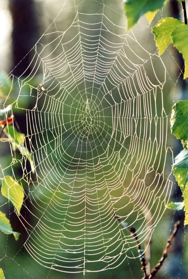Web der Spinne lizenzfreies stockbild